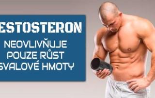 Testosteron neovlivňuje pouze růst svalové hmoty
